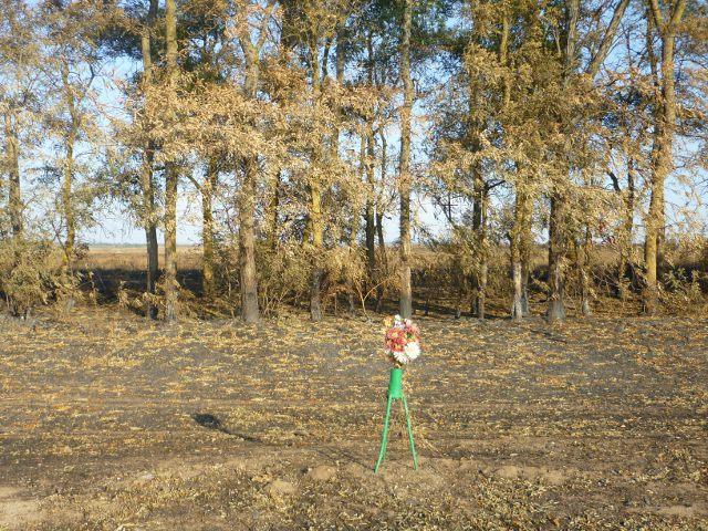 verbrannterwald